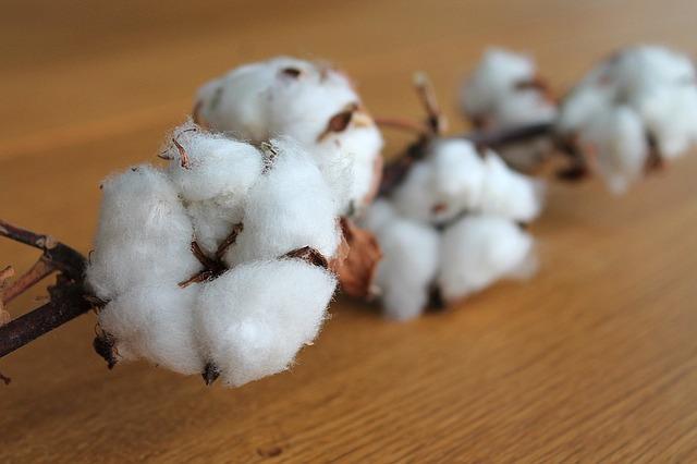 větev bavlny