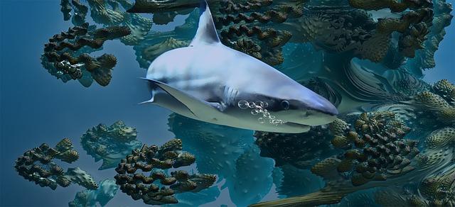 plovoucí žralok
