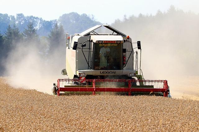 sklizeň pšenice kombajnem.jpg